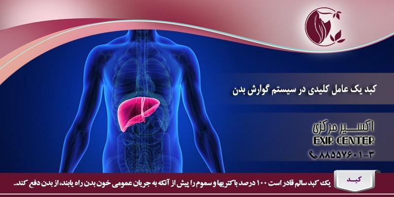 کبد یک عامل کلیدی در سیستم گوارش بدن